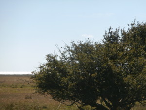 Biätarpar poserar vid boet